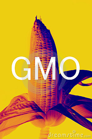 GMOs Corn Stock Photo - Image: 21284060