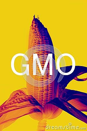 GMOs corn