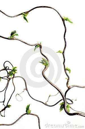 Free Gnarled Branches Stock Images - 7816674