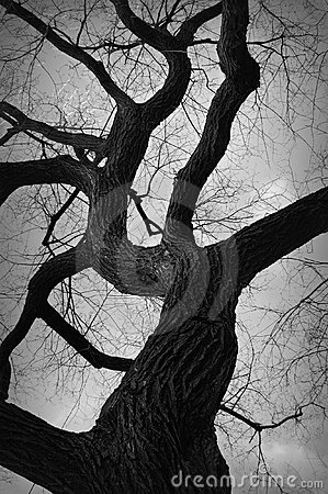 Free Gnarly Tree Stock Image - 20318871