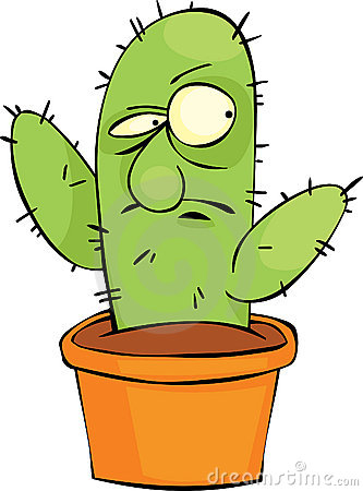 Gniewny kaktus