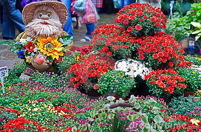 A gnome and chrysanthemum