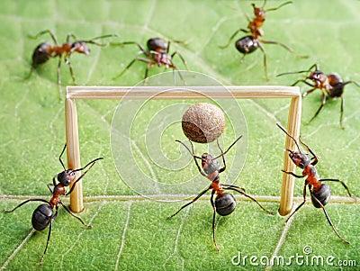 Goal, ants play soccer