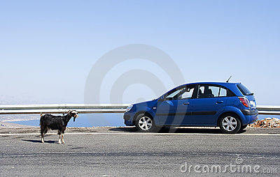 Goat and car