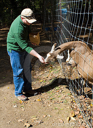 Goat Petting Zoo