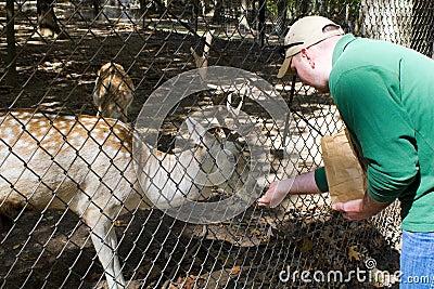 Goat Petting Zoo
