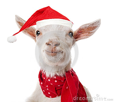 Goat with a red santa cap