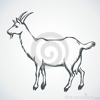 Free Goat. Vector Drawing Stock Photo - 52142040