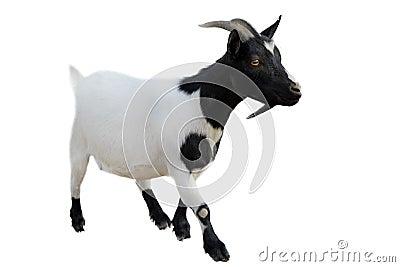 Goatee