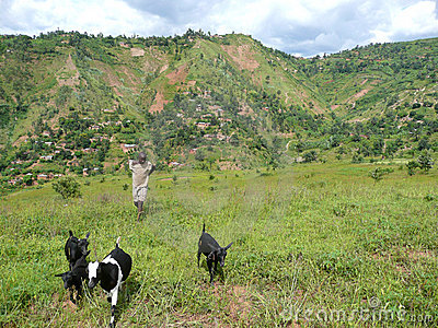 Goatherd in Burundi Hills Editorial Photo