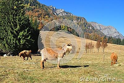 Goats s farm 2