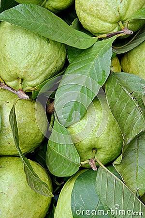 Goiaba fresca da maçã no verde