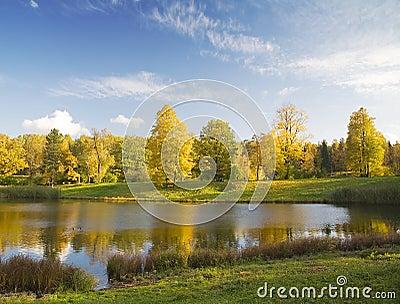 Gold autumn under blue sky