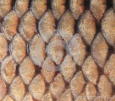Gold background - fish scales