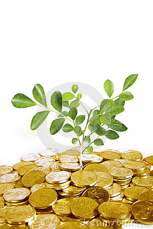 Gold coins with plant