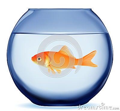 Free Gold Fish Royalty Free Stock Photos - 28225088
