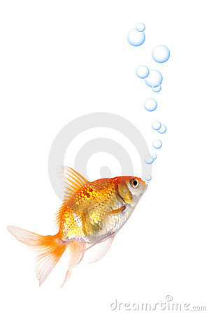 Free Gold Fish Stock Images - 9145624