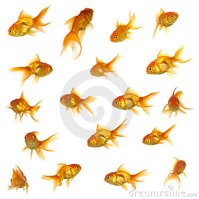 Free Gold Fish Collection Royalty Free Stock Photos - 3155058