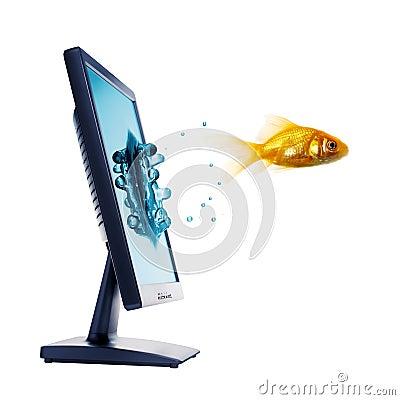 Gold fish and computer monitor
