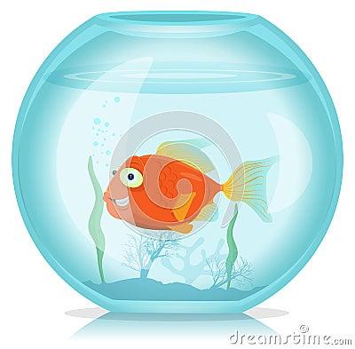Free Gold Fish In Aquarium Stock Images - 27586764
