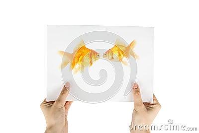 Gold fish photo