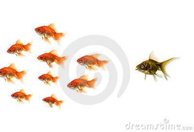 Gold fish standing out from the crowd