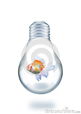 Gold fish swiming in light bulb
