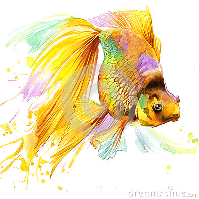 Free Gold Fish T-shirt Graphics, Gold Fish Illustration With Splash Watercolor Textured Background. Stock Photos - 59945233