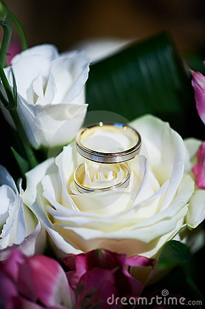 Gold wedding rings on the flower rose
