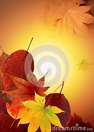 Free Golden Autumn Royalty Free Stock Photos - 3314748