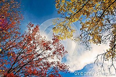Golden autumn landscape.