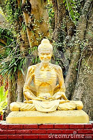 Golden buddha image and big tree background.