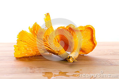 Golden chanterelle fungus on the cutting board