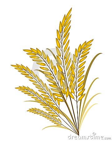 Golden Colors Of Jasmine Rice On White Background Royalty Free Stock Photo Image 38691125