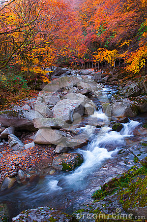 Free Golden Colors Of Forest And Stream Stock Photography - 59254072