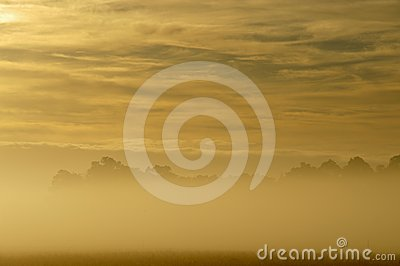 Golden dawn above the mist