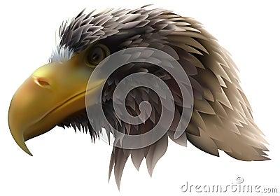 Golden Eagle (Haliaeetus pelagicus)