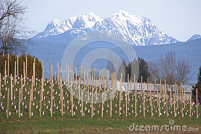 Golden Ears Mountain Range