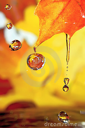 Golden Fall Drops. Stock Photography - Image: 11345812