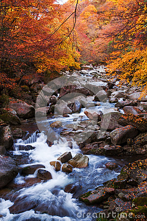 Free Golden Fall Season Forest Stock Photo - 46581990
