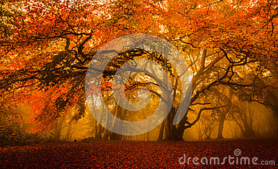 Golden Fall season forest