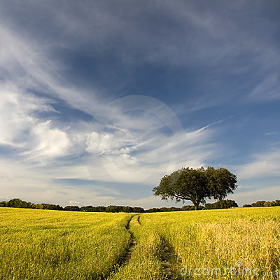 Free Golden  Field Stock Images - 5606074