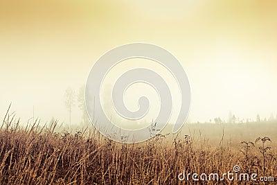 Golden foggy field
