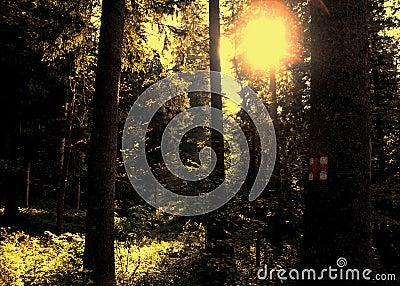 Golden forest