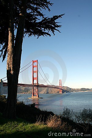 Golden Gate Bridge behind tree