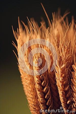 Free Golden Grain Stock Image - 4085301