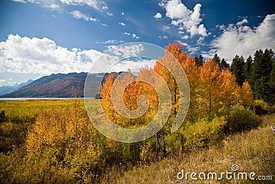 Golden - Grand Teton National Park