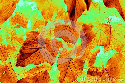 Abstract falling leaves of autumn.