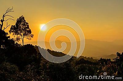 Golden light of sunset