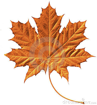 Free Golden Maple Leaf Royalty Free Stock Images - 189739